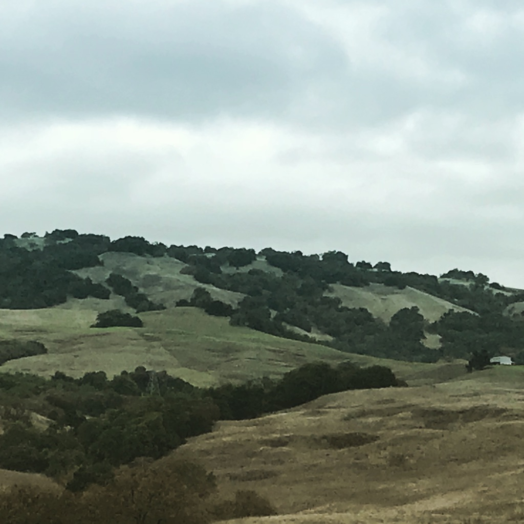 The Winter Hills in Petaluma