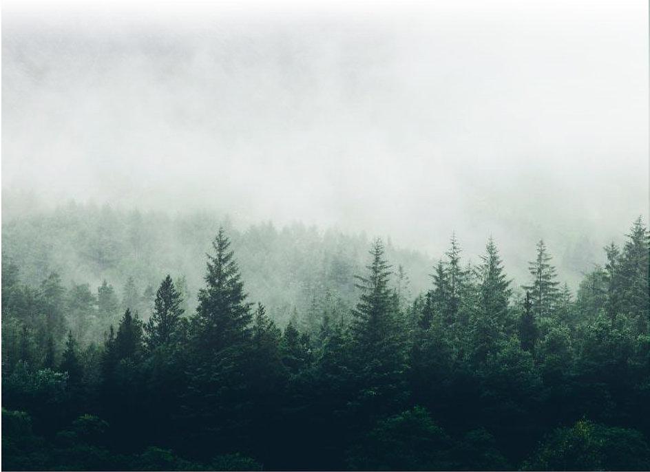 Ecoplate-background.jpg