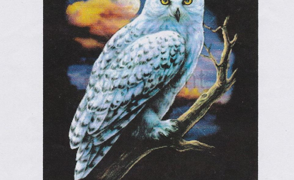DAV White Owl T-Shirt