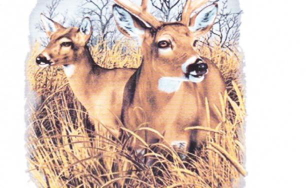 DAV Deer T-Shirt