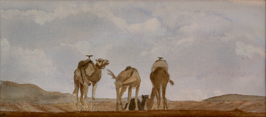 Camels, Atlas Mountains, Morocco