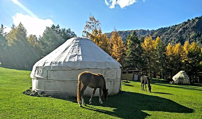 מחנה יורטות