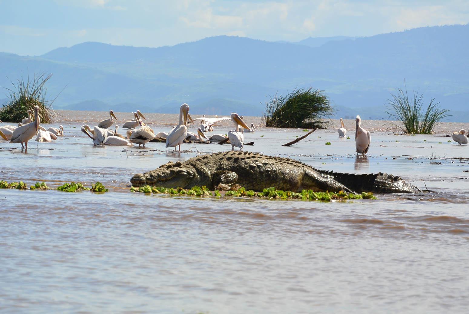 שייט על אגם קומו