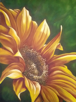 sunflower for WOCE