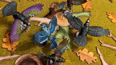 All Birds.jpg