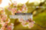 image--097.jpg
