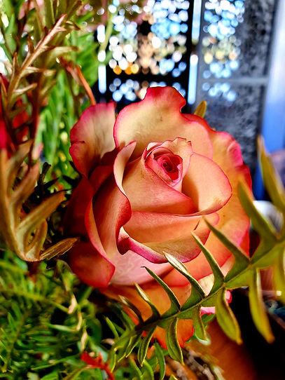 Rose and Grevillia.jpg