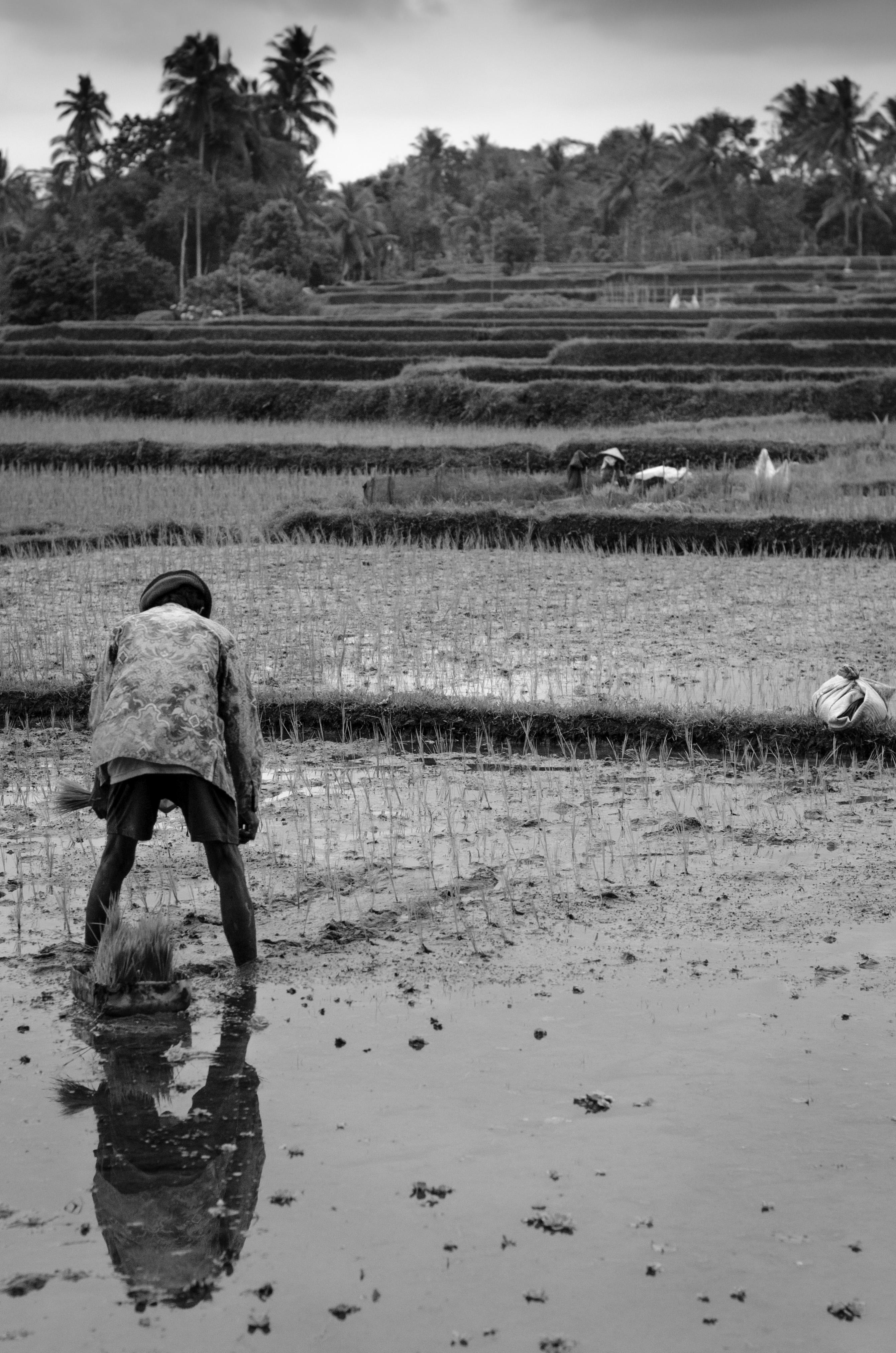 Man 2013 Bali