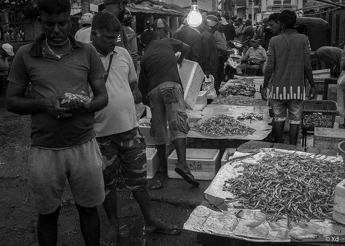 Big Fish Sri Lanka, 2018, Negombo-10.jpg