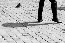 Coq Pigeon , Lille , 2014