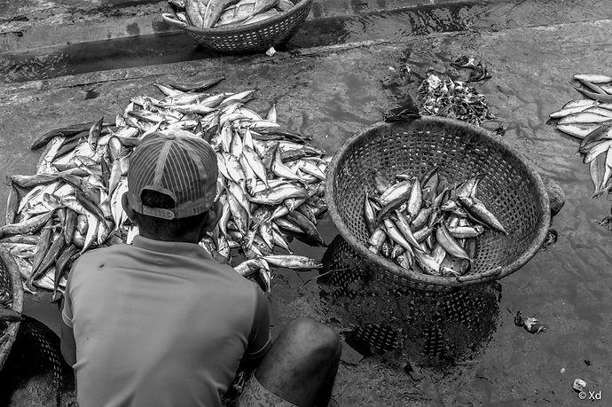 Sri Lanka, 2018, Negombo-3.jpg