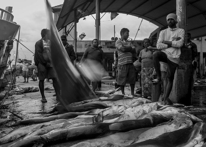 Big Fish Sri Lanka, 2018, Negombo-1.jpg