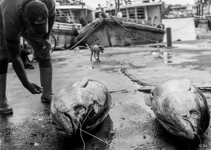 Big Fish Sri Lanka, 2018, Negombo-4.jpg