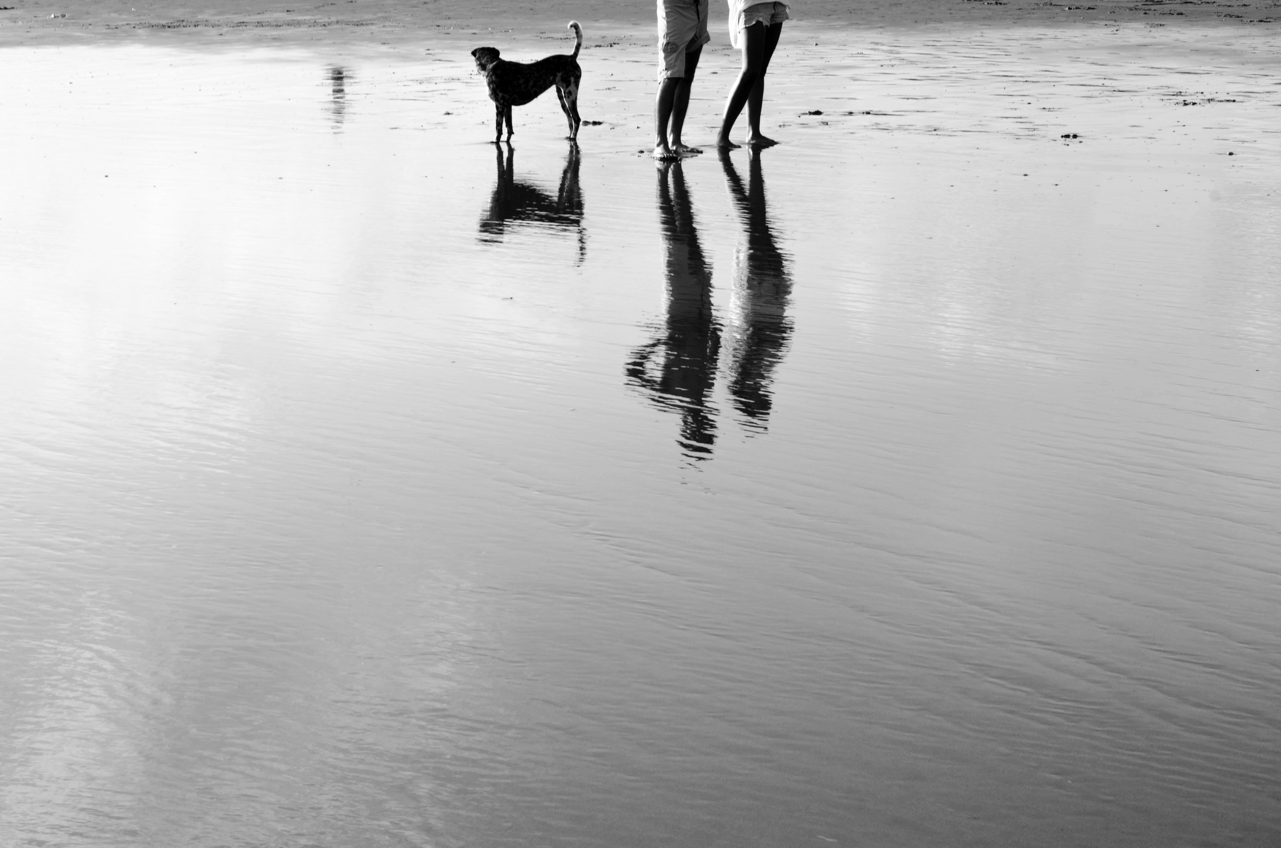 Dog 2013 Bali