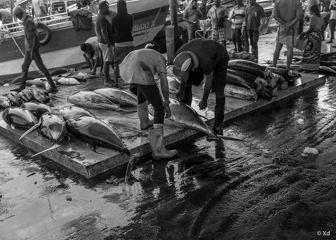 Big Fish Sri Lanka, 2018, Negombo-6.jpg