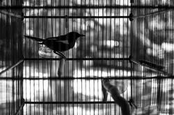 birdy-2014-Bali