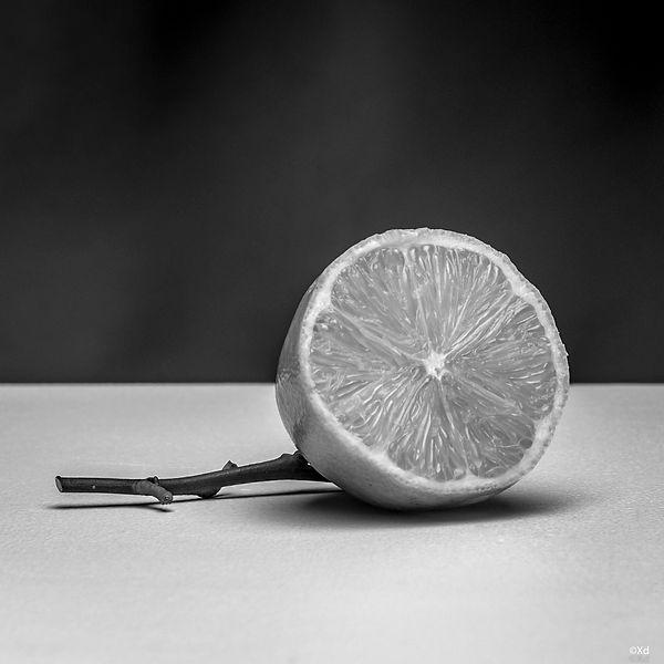 Lemons, 2018, Lille-1.jpg