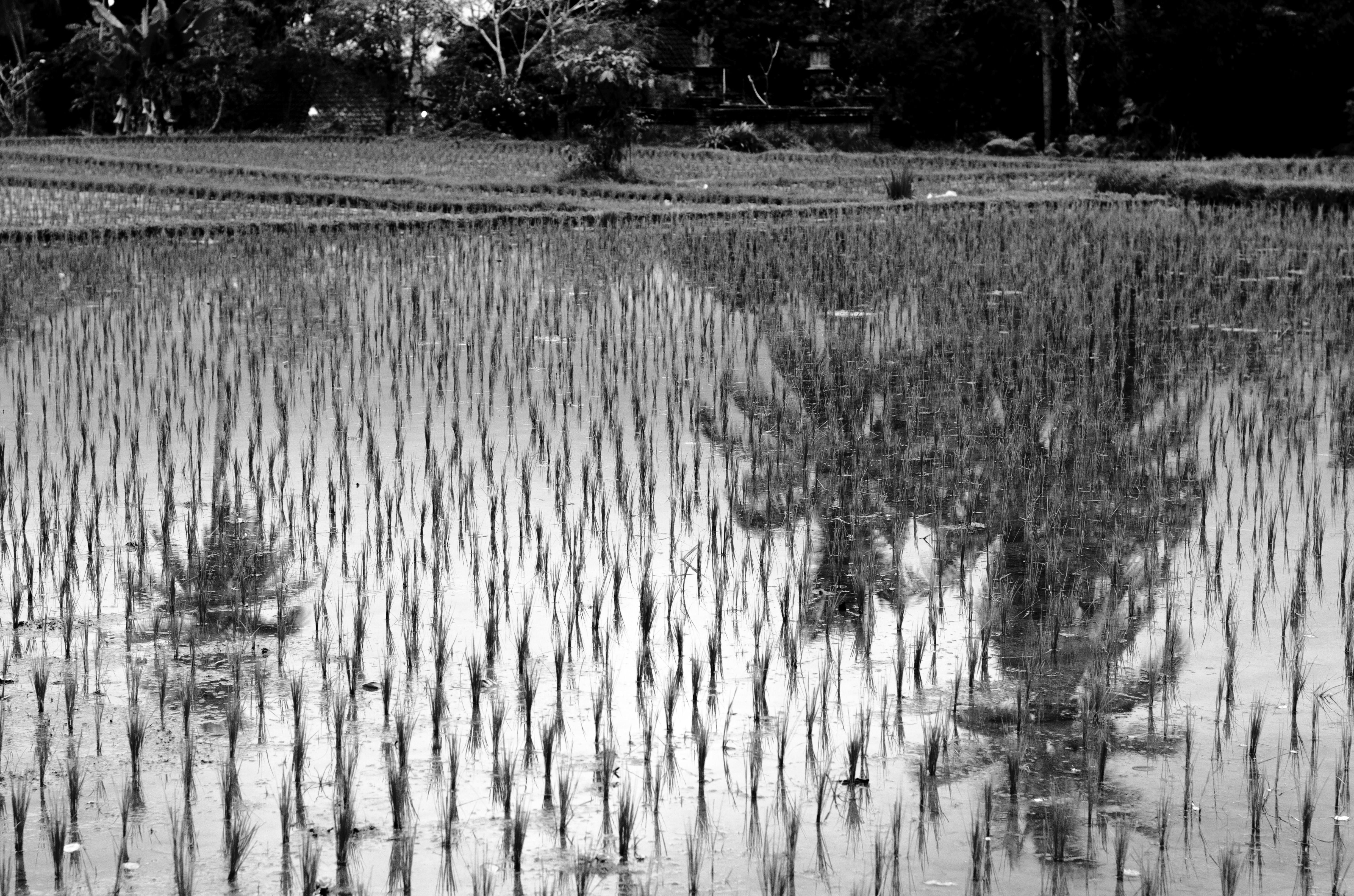 Palmier 2013 Bali