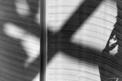 X-Shadow, 2014, Bali