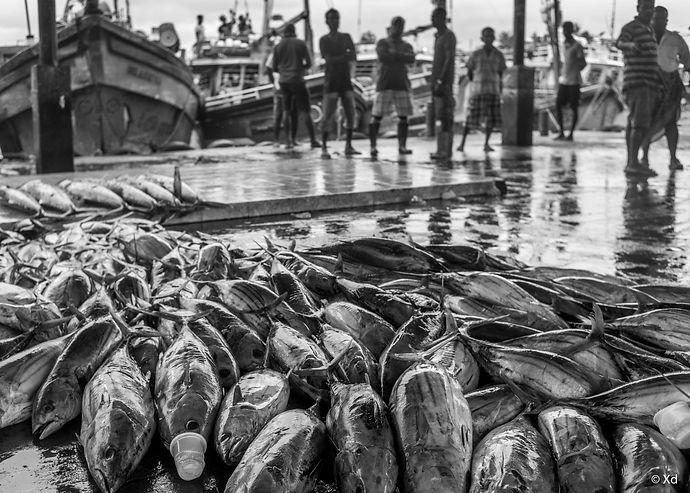 Big Fish Sri Lanka, 2018, Negombo-16.jpg
