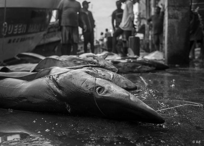 Big Fish Sri Lanka, 2018, Negombo-2.jpg
