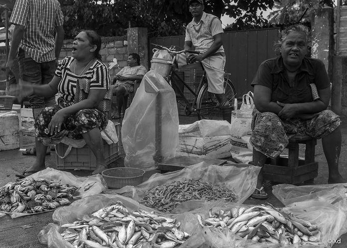 Big Fish Sri Lanka, 2018, Negombo-15.jpg