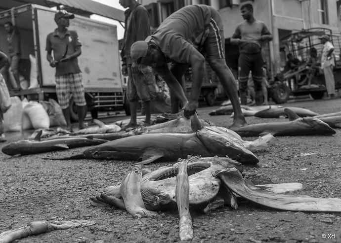 Big Fish Sri Lanka, 2018, Negombo-7.jpg