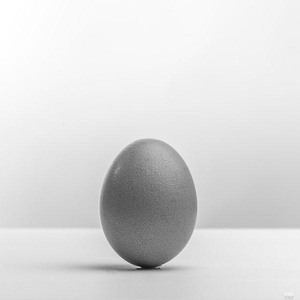 egg, 2018, Lille-1.jpg