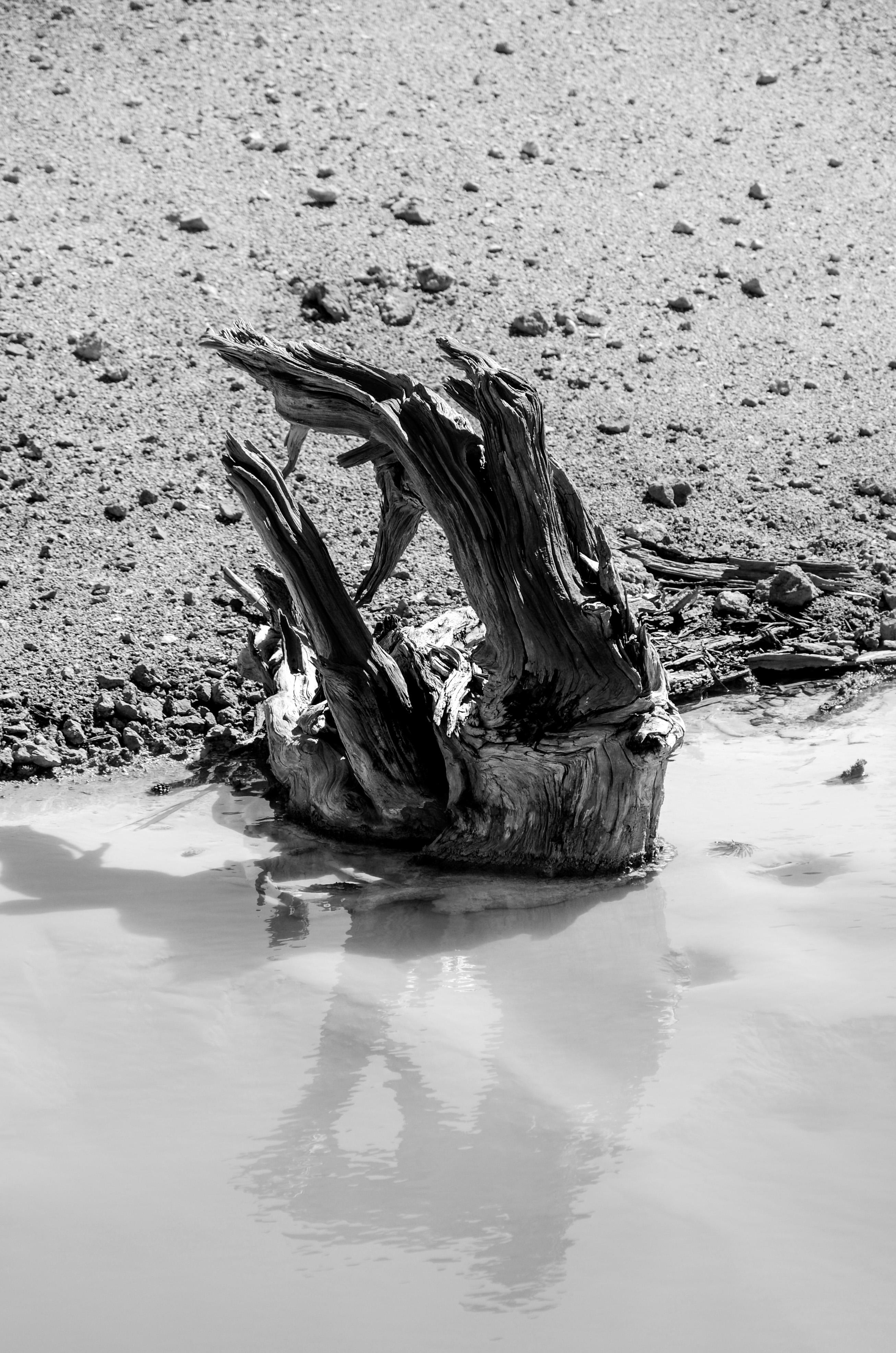Dead 2011 Yellowstones