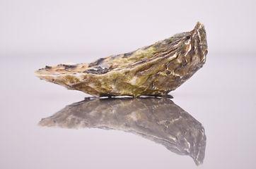 oyster2.jpg