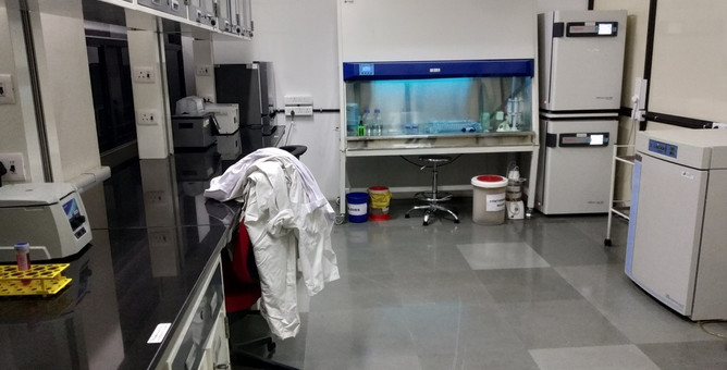 Cell_Culture_4.jpg