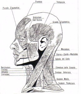 Les dents: rôle essentiel pour la posture