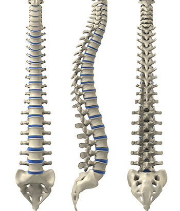 Non l'ostéopathe ne remet pas en place!
