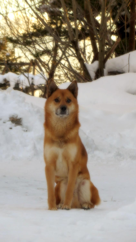 愛犬あすぱら君(♂7歳)