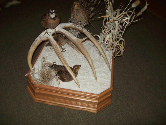 Covy of Quail / deer antler/ base