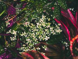 Botanical Gardens-132.jpg