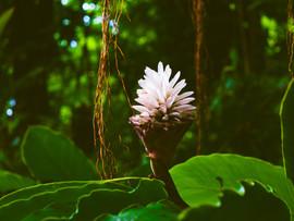 Botanical Gardens-39.jpg