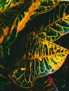 Botanical Gardens-75.jpg