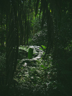 Botanical Gardens-171.jpg