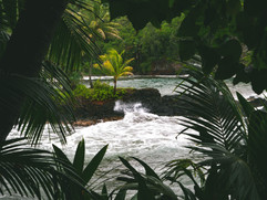 Botanical Gardens-152.jpg