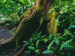 Botanical Gardens-175.jpg