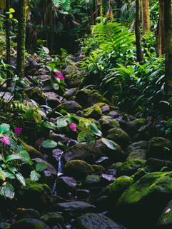 Botanical Gardens-173.jpg