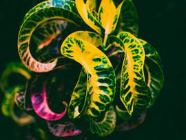 Botanical Gardens-110.jpg