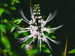Botanical Gardens-181.jpg
