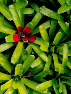 Botanical Gardens-63.jpg