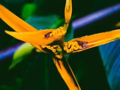 Botanical Gardens-61.jpg