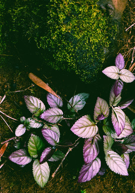 Botanical Gardens-46.jpg