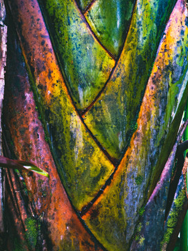 Botanical Gardens-129.jpg