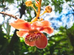 Botanical Gardens-179.jpg