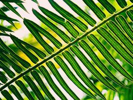 Botanical Gardens-93.jpg